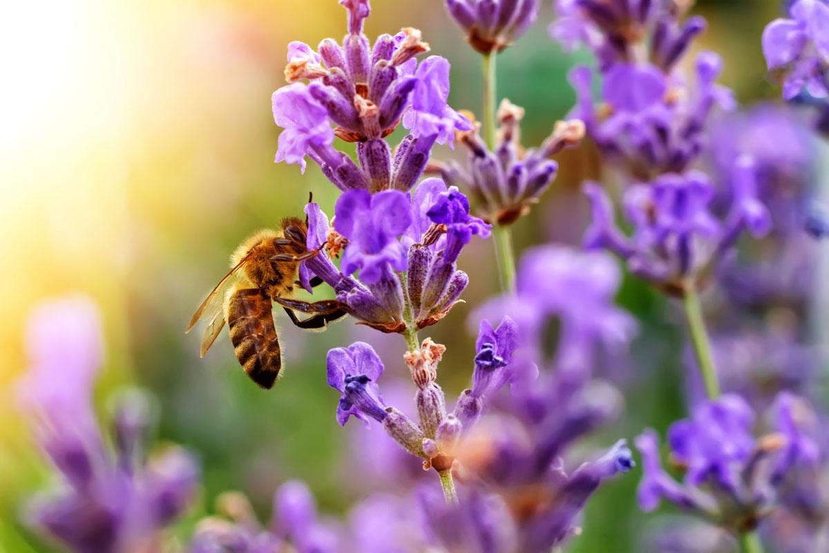 Beautiful pollinator at work
