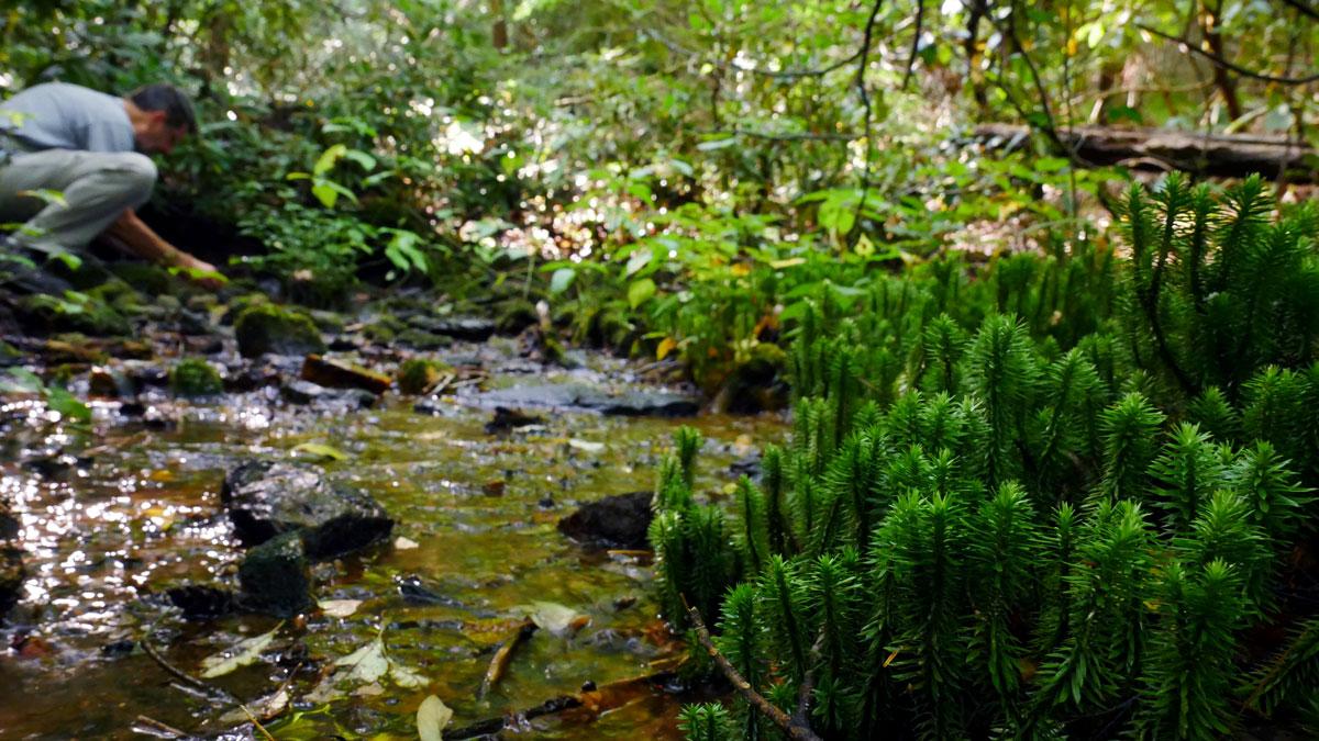 Wilma Dykeman Homestead - Mossy Creek
