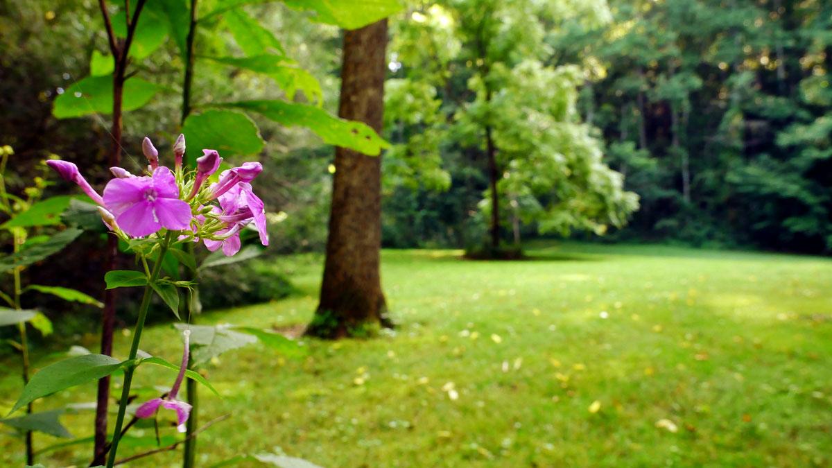 Wilma Dykeman Homestead - Pink Flower