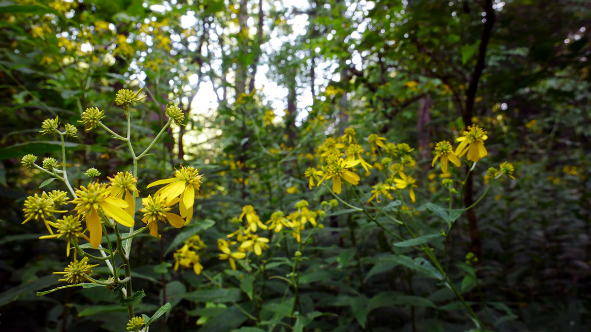 Wilma Dykeman Homestead - Yellow Flowers